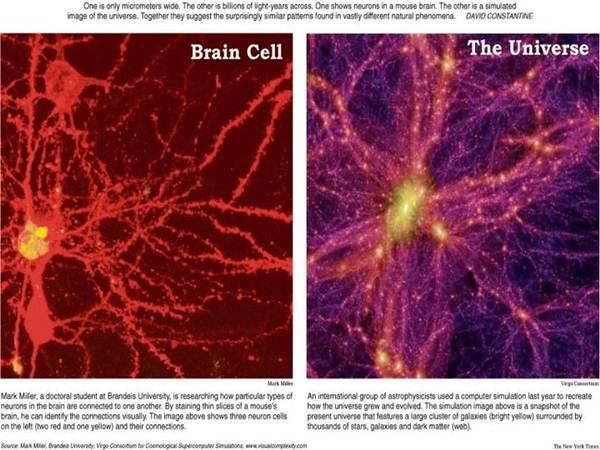 Sel Otak tikus dan alam semesta